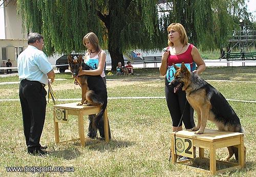 Переможці класу цуценят Кассандра Анвальт та Кліо Анвальт