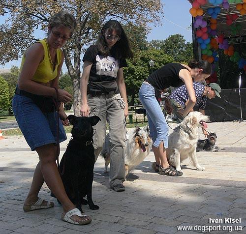 Шохалевич Оксана з Нітою виконують слалом між собаками
