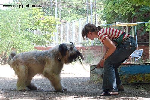Оля (Санкт-Петербург, Росія) та Зорро грають з канатиком