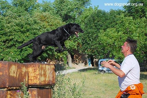Сергій Воронін (Одеса) ловить свого стрибучого лабрадора Діка