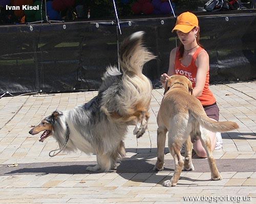 Ніта - стрибок через собаку