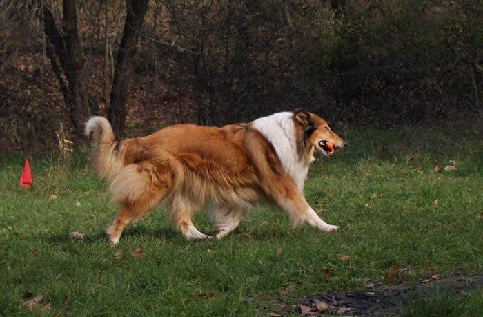 Міський собака - 1. Нетта