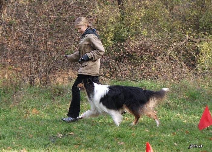 Міський собака - 1. Юлія Степанова