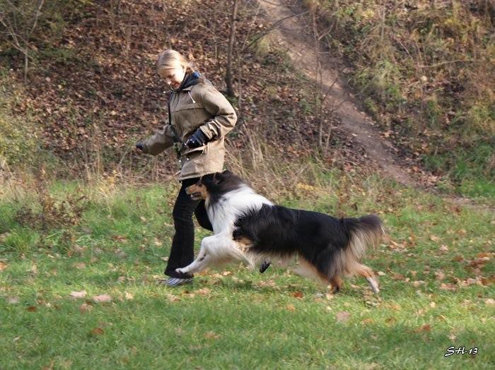Міський собака - 1. Ю.Степанова