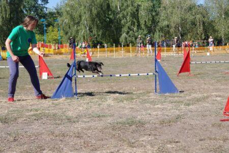 24-й Чемпіонат України з аджиліті - Cherkasy Open Agility 12-13.09.2020 (фото)