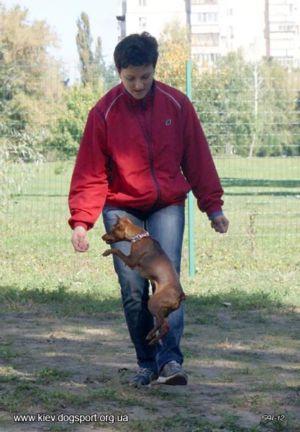 Всеукраїнський Турнір з танців із собаками 23.09.2012 (фото)