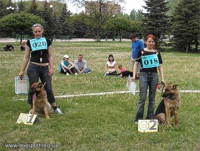 Клас молодих собак: суки Яна Дженестра та Ауді Нід Фор Спід