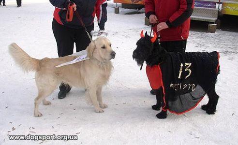 Золотистий ретривер Нік у костюмі ангела та чорний різеншнауцер Бася у костюмі чорта чудово вписуються у звичаї новорічно-різдвяних свят