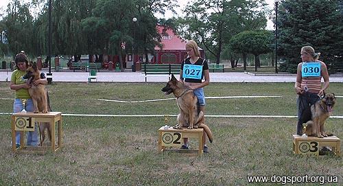 Клас молодих собак, суки