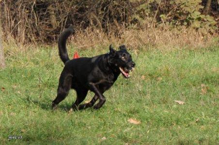 Міський собака - 1. Бумер