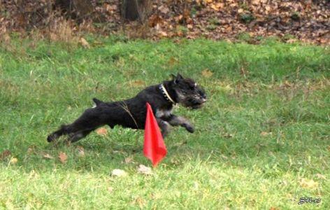 Міський собака - 1. Ларс